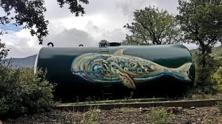 Une baleine dans les alberes